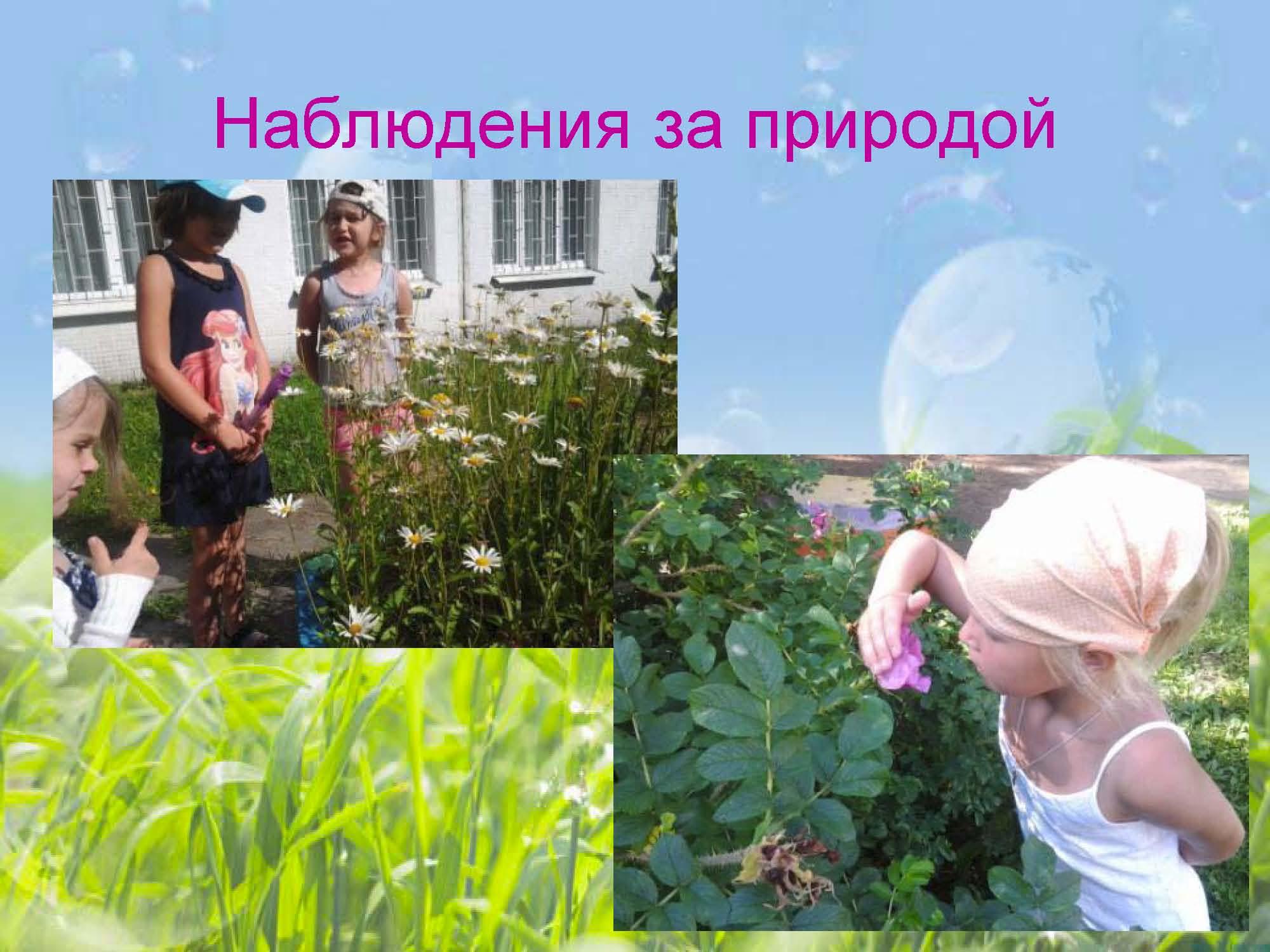 nature observation